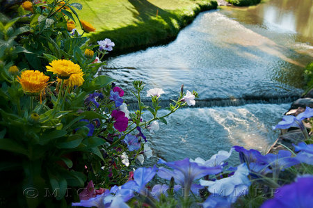 Denver Country Club ~ Cherry Creek Plantings