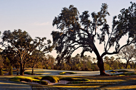 Fallen Oak No.6, Biloxi, MS. Tom Fazio, Architect